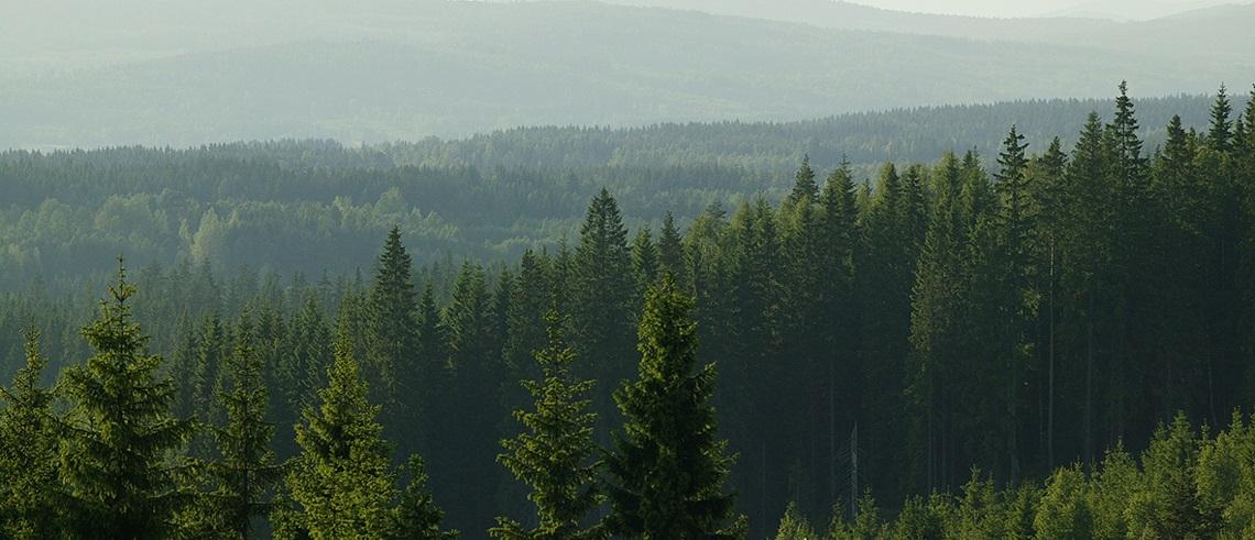 Investera i skog